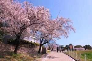 大池公園桜まつり2