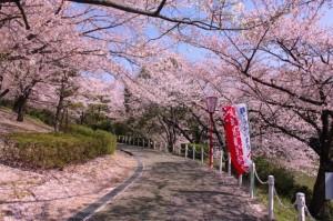 大池公園桜まつり1